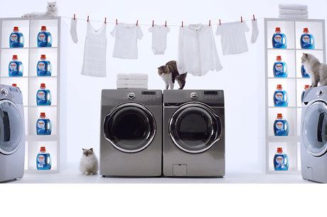 Persil® ProClean® laundry detergent has something in store for all cat lovers. When it comes to clean, nobody's pickier than our feline friends.